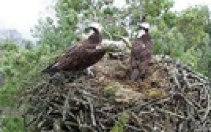 Axis camera provides birds eye view